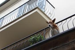 Orvieto Pup